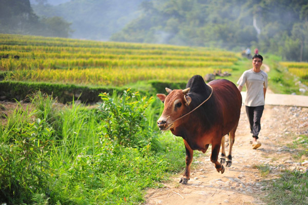 Trekking Mai Chau Pu Luong 3 Days Trip