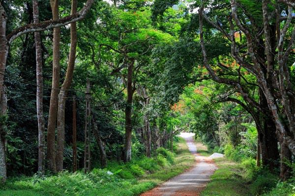 Hanoi Day Tour Cuc Phuong National Park